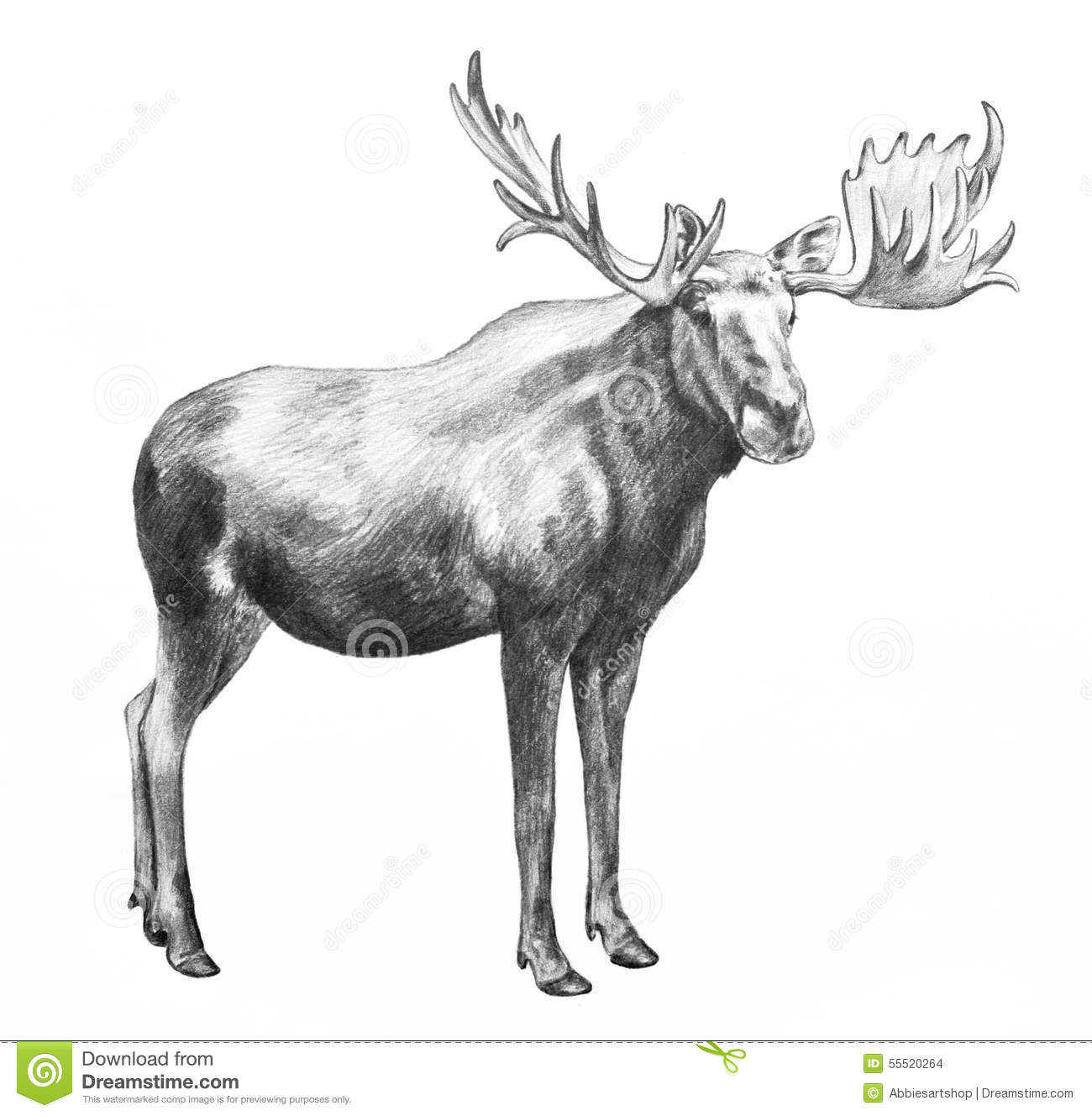 Big moose with antlers, hand drawn illustration