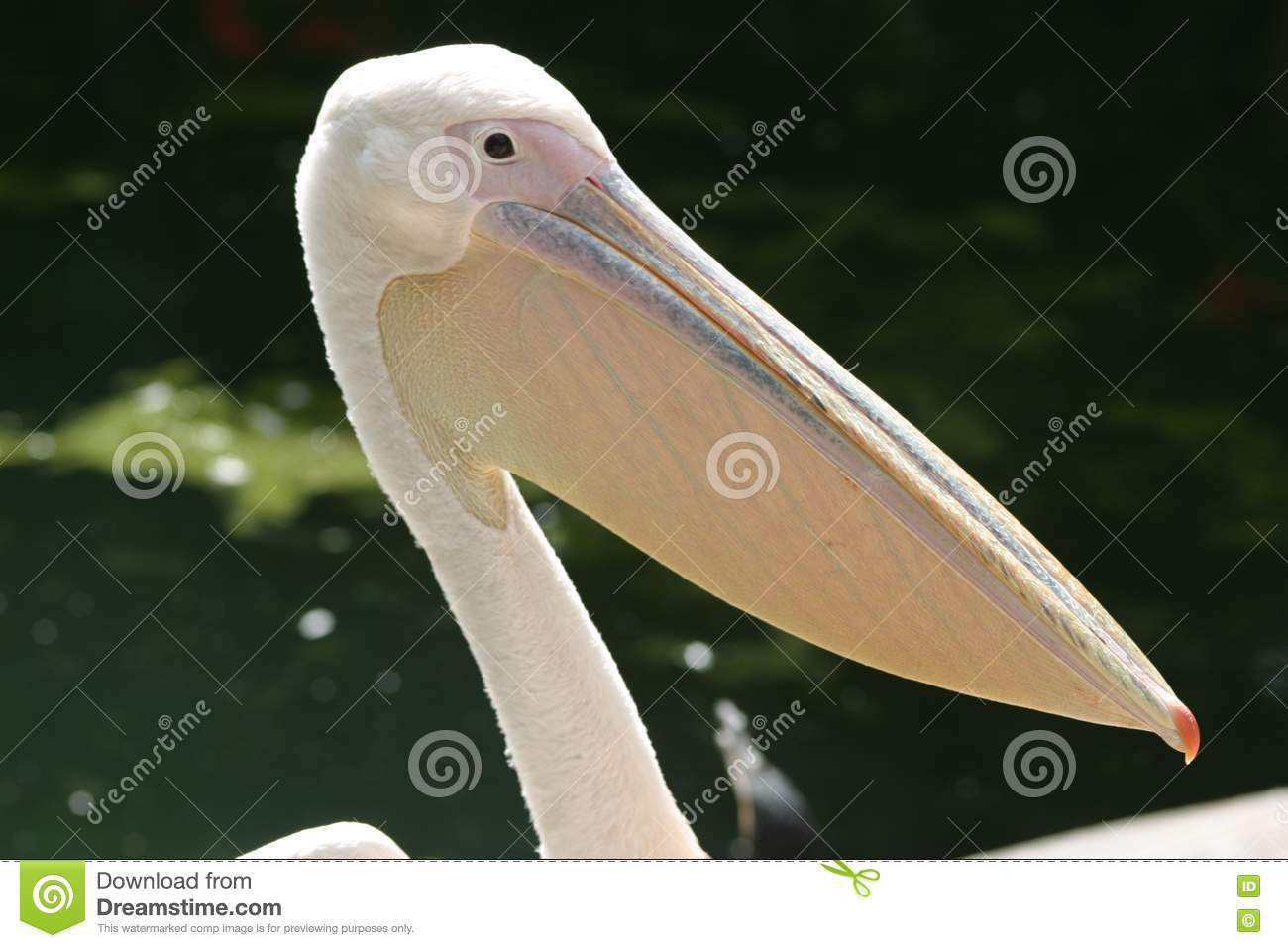Big Mouth Bird Stock Photography Image 19382