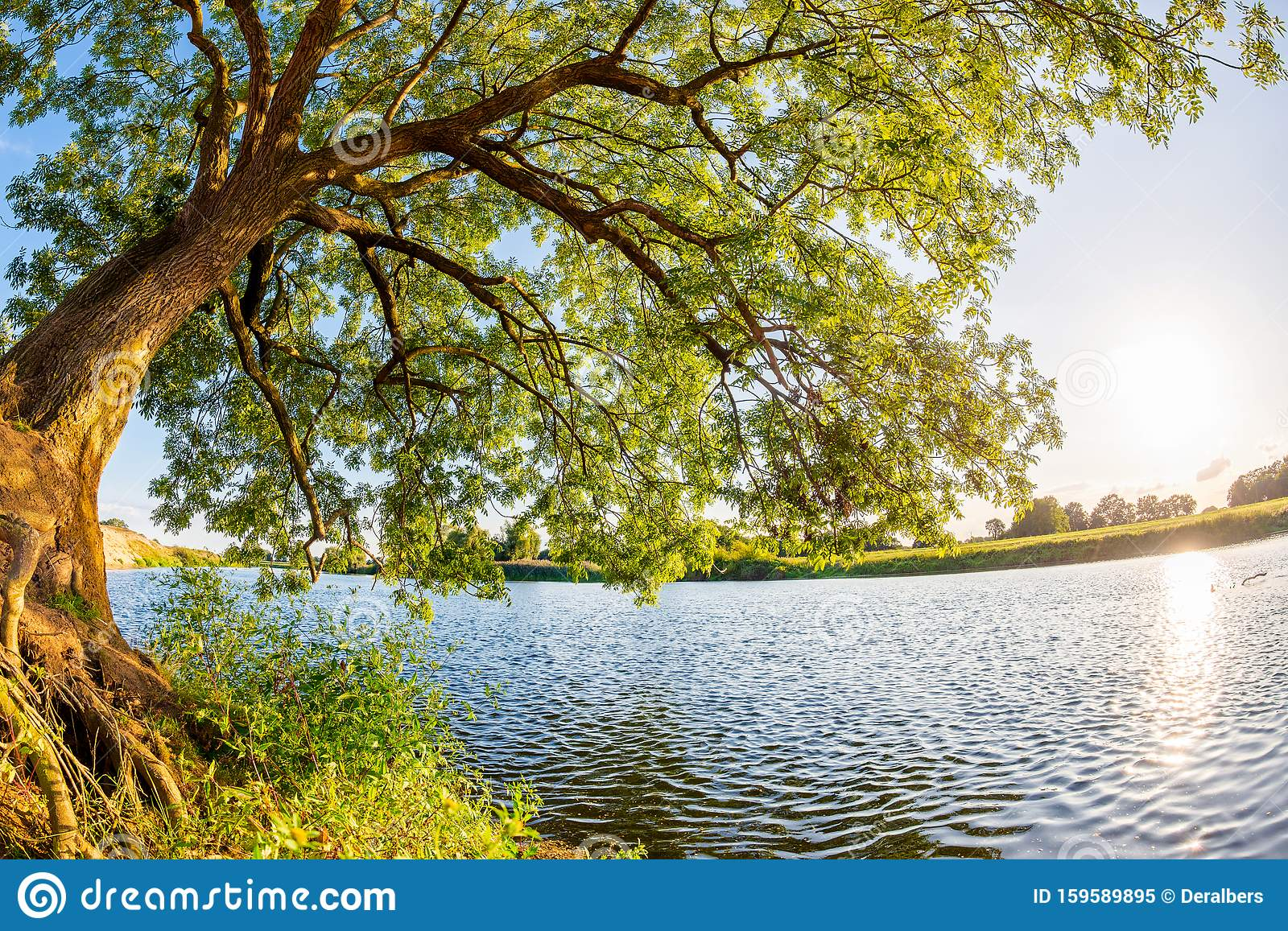 Big, Old Tree With River And Bright Sun In The Background Stock Image -  Image of beauty, land: 159589895
