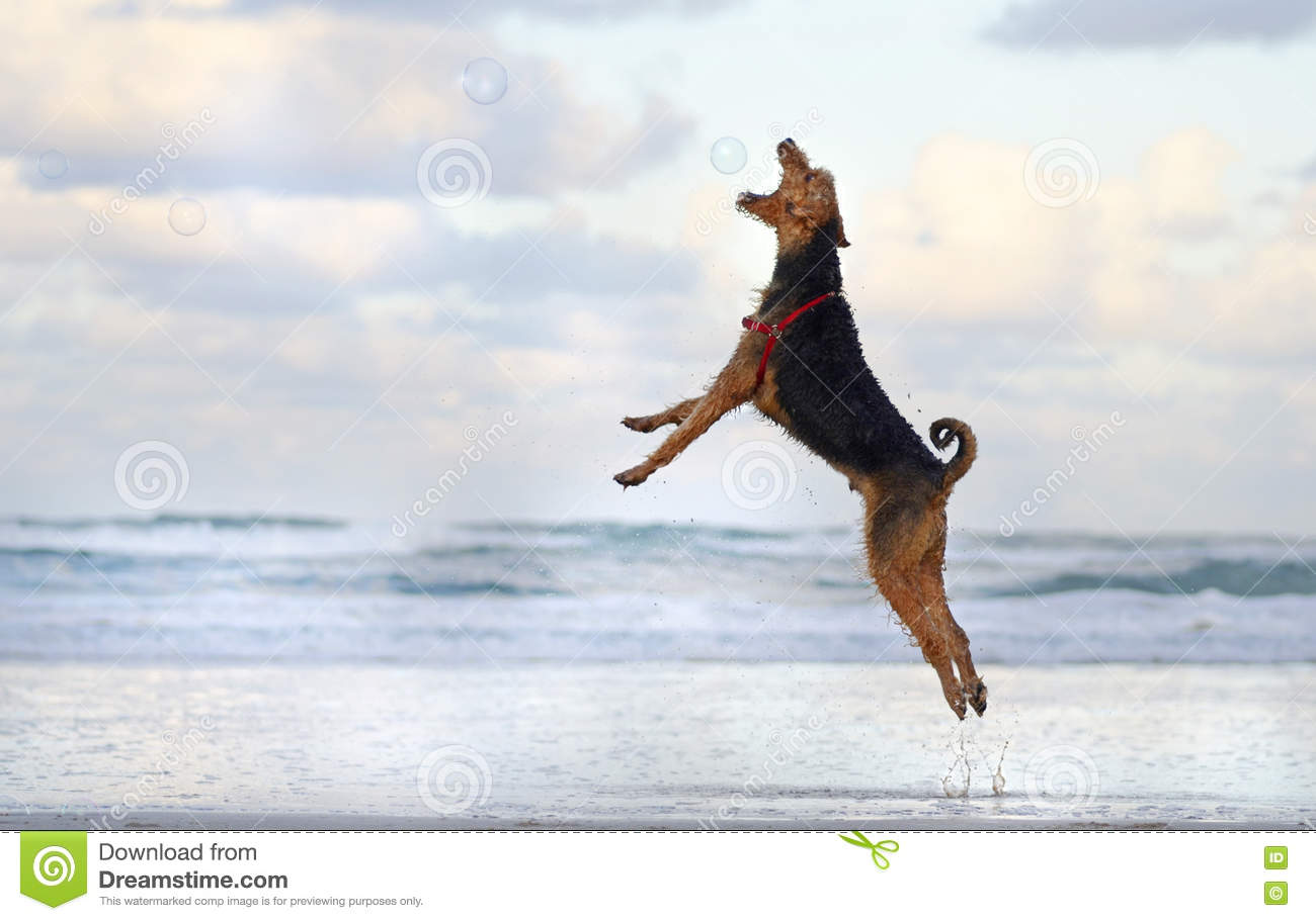 Dog At The Beach Royalty Free Stock Photography