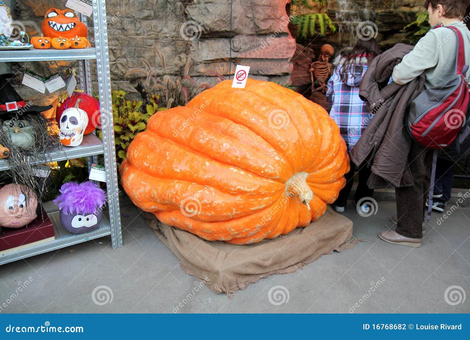 Big pumpkin!