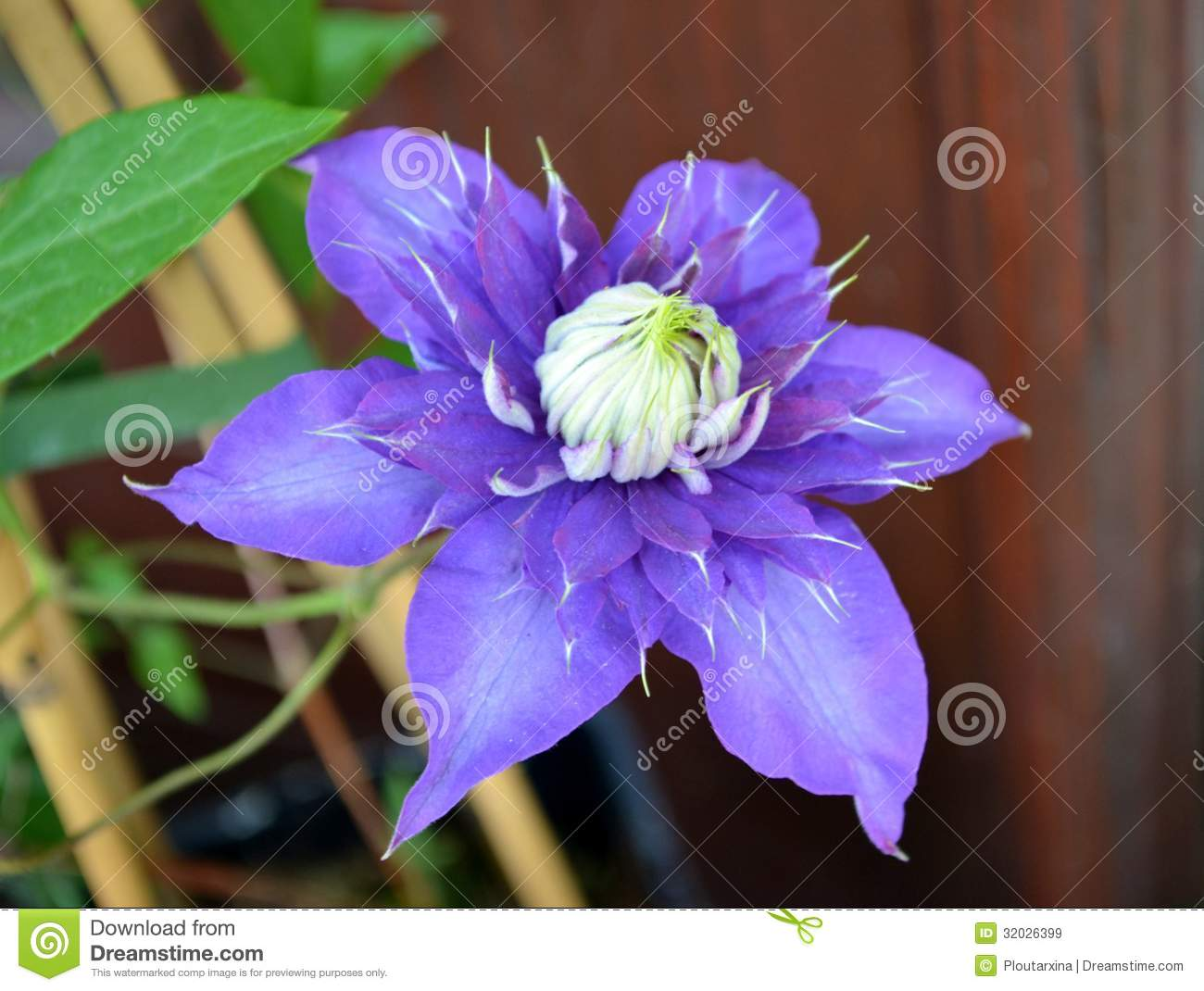 big purple flower royalty free stock images  image, Beautiful flower
