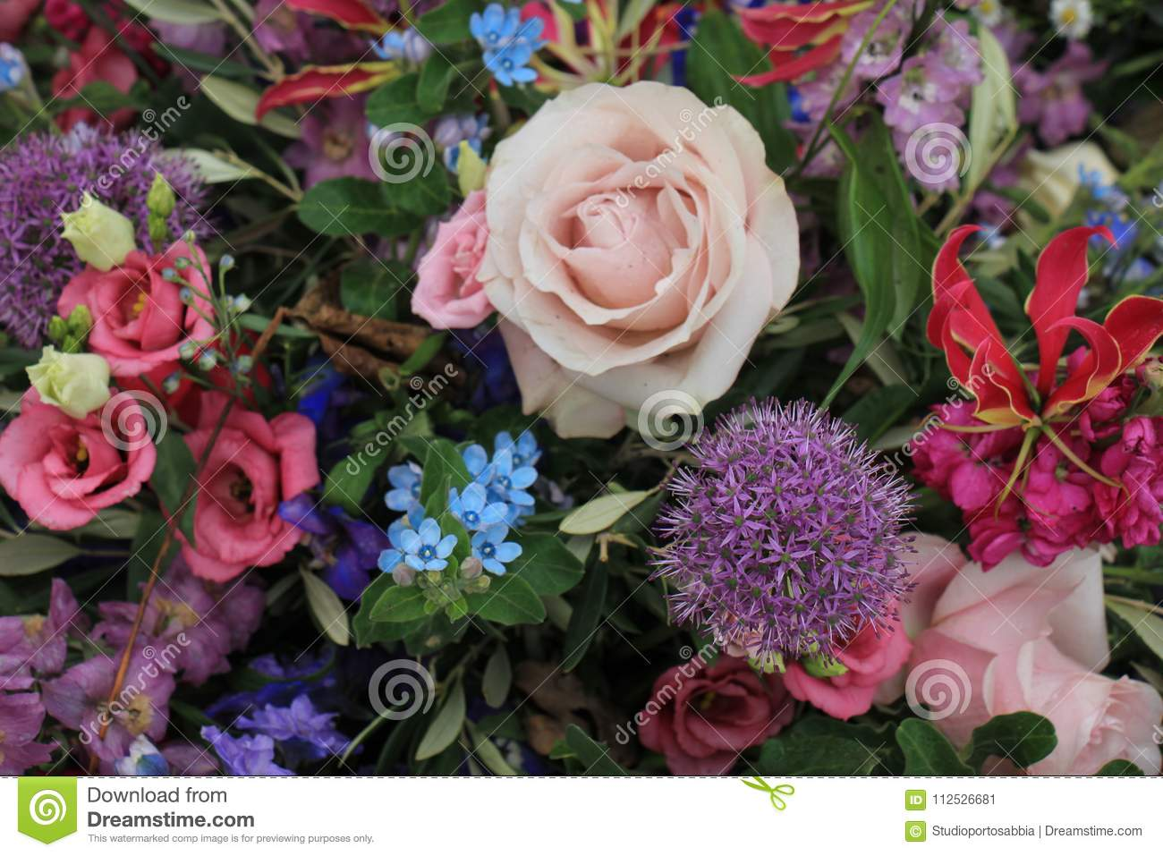 Big Purple Roses Stock Image Image Of Flower Pastel 112526681