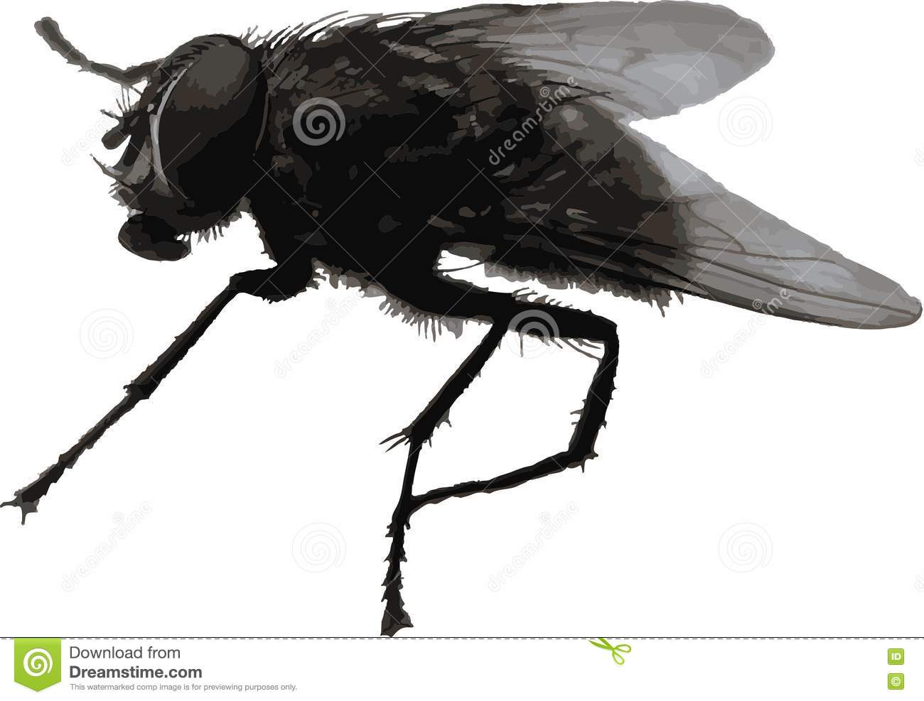 Realistic Housefly, Gnat, Damselfly And Other Vector Elements. Set ...
