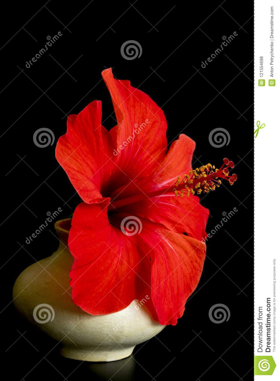 Big Red Flower In The Vase Isolated On Black Background. Flower Of ...