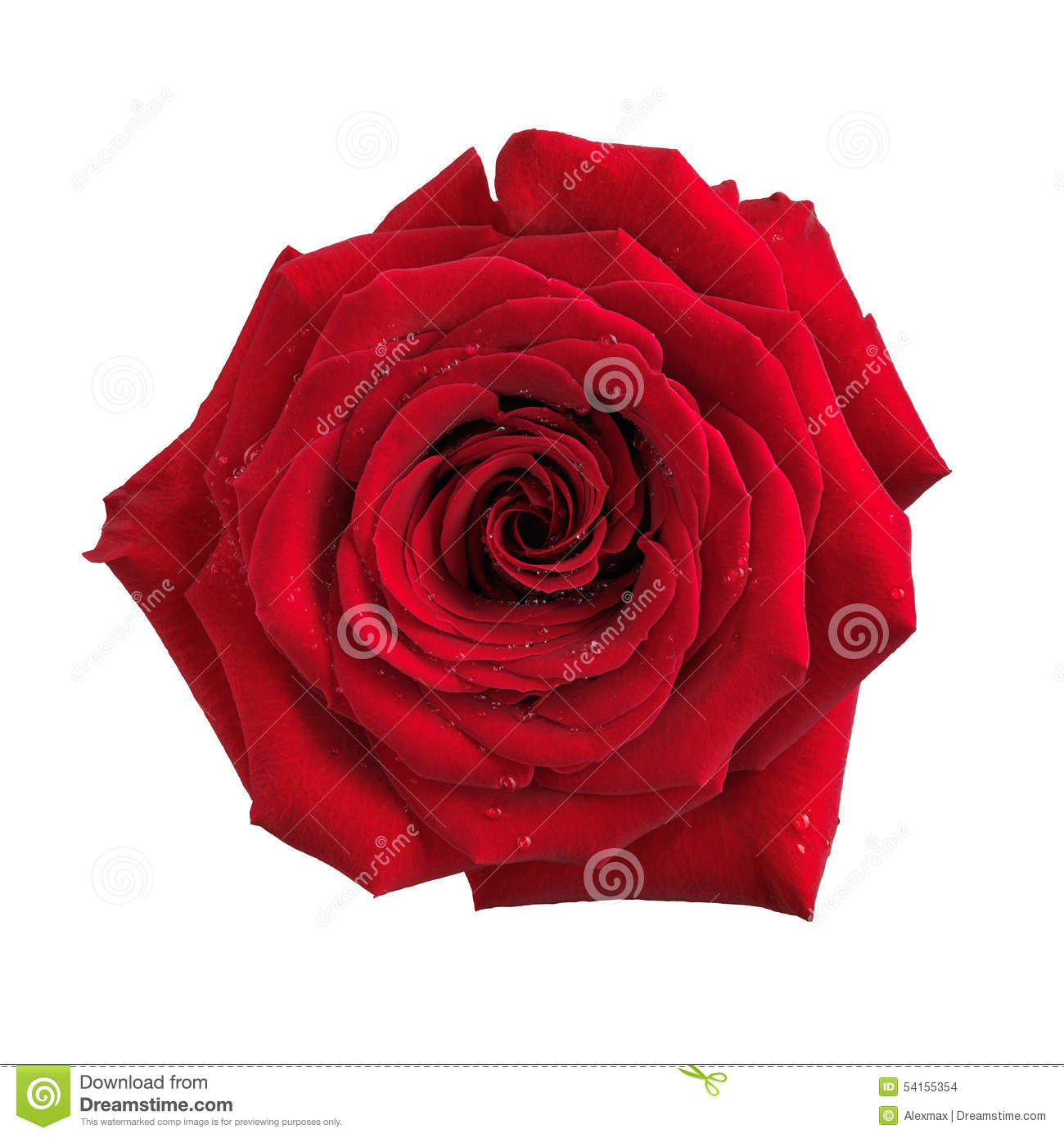 Big red rose flower isolated stock photo image 54155354 - Big rose flower wallpaper ...