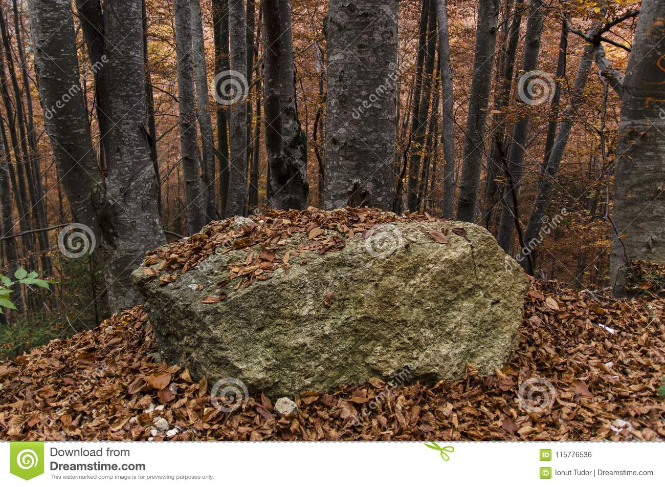 Big rock among old beech trees in autumn