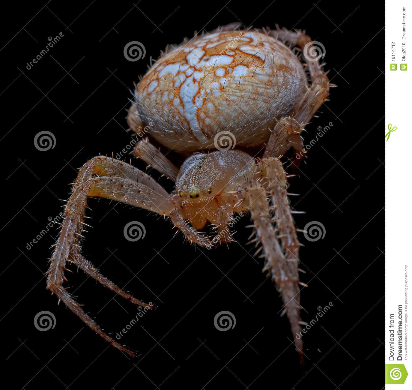 Big Scary Spider Stock Photography - Image: 16114712