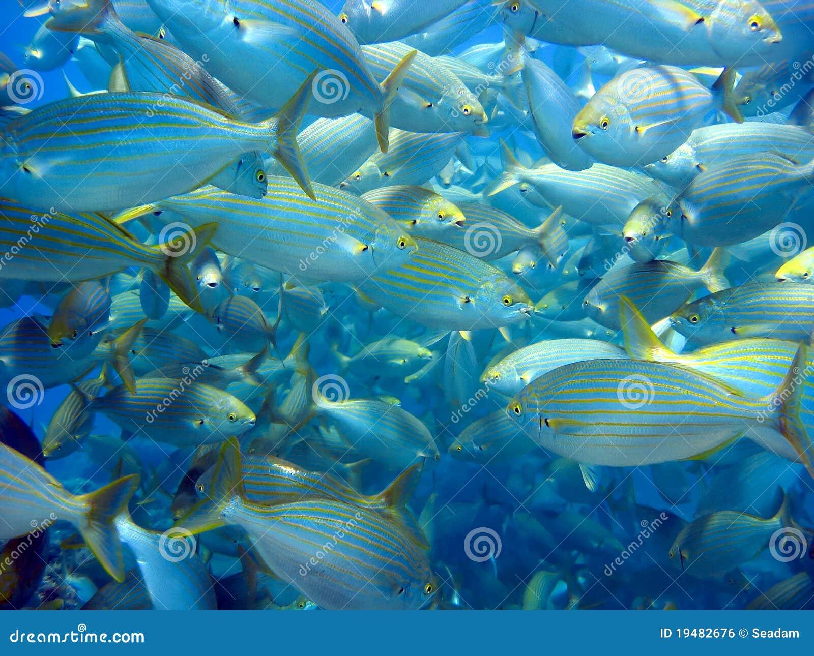 Big school of fish royalty free stock image image 19482676 for School of fish