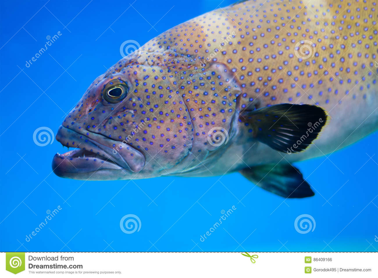 An ocean with a big fish vector illustration for The big fish