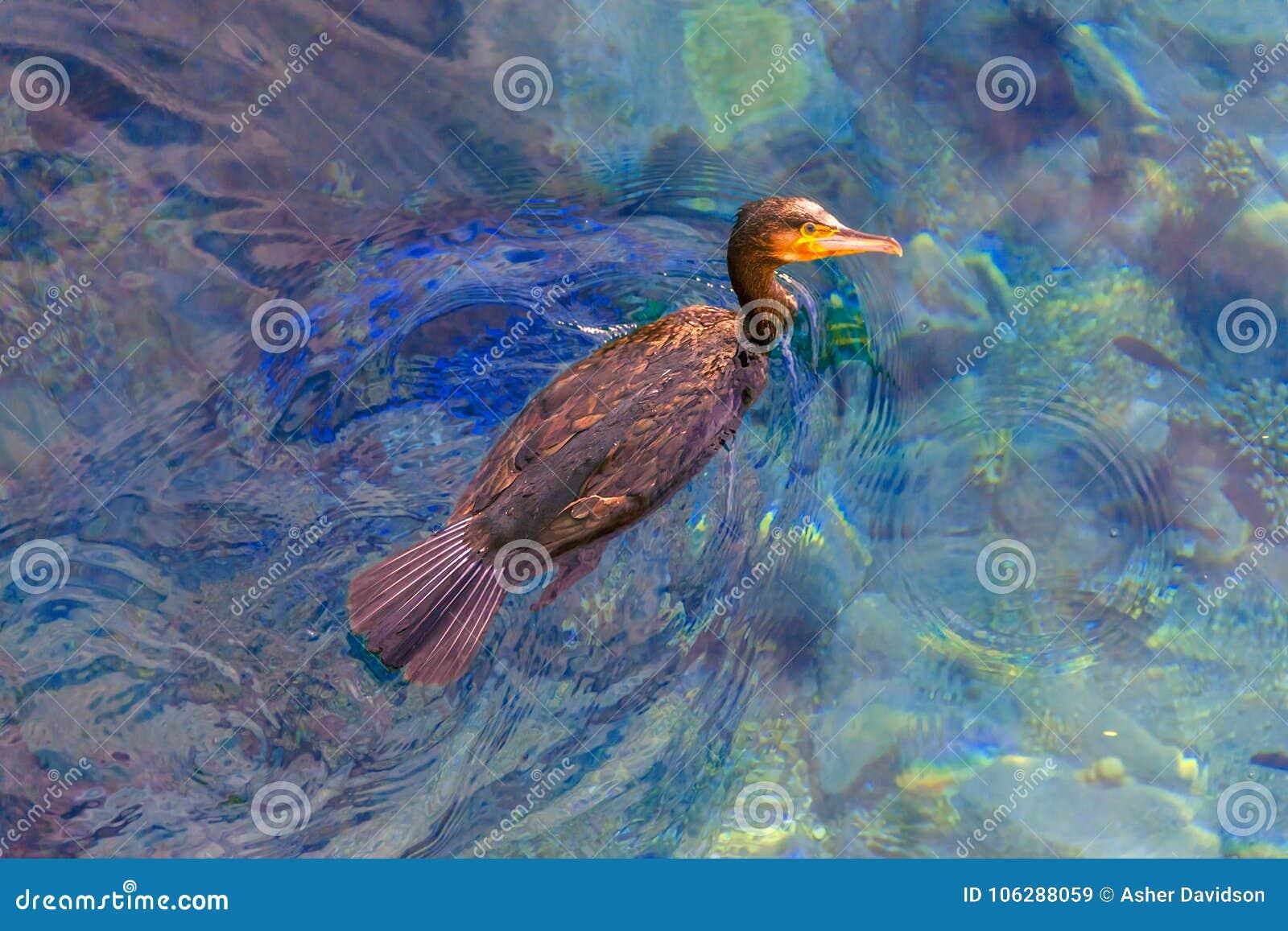 The big sea predator bird