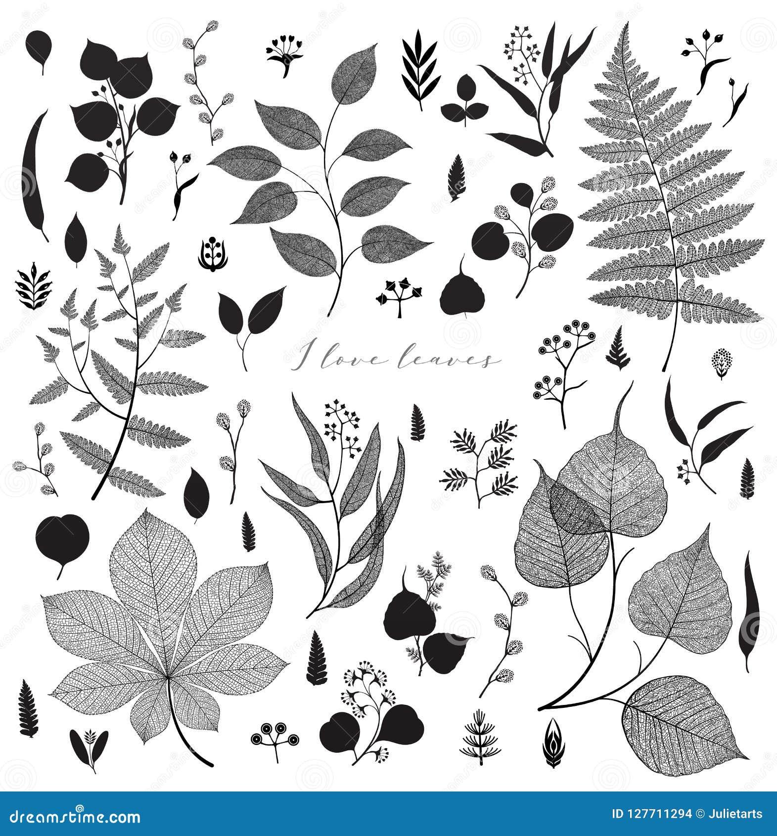 Big set of branches and leaves, fall, spring, summer. Vintage vector botanical illustration, floral elements in black design