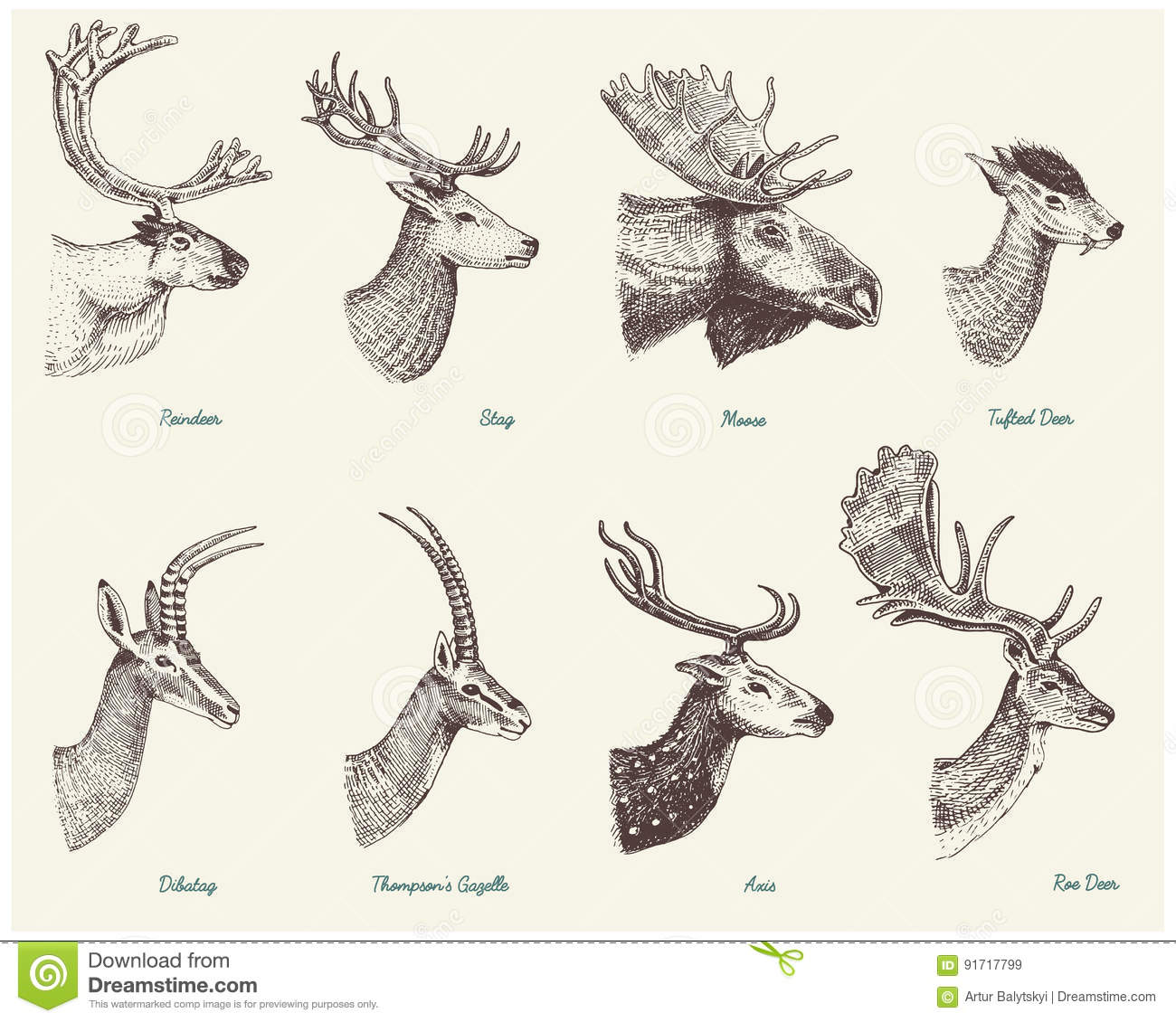 Big Set Of Horn Antlers Animals Moose Or Elk With Impala Gazelle And Greater Kudu Fallow Deer