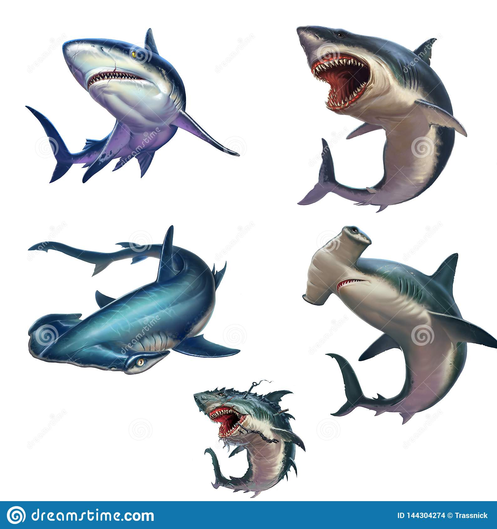 Big set of sharks isolated realistic illustration.