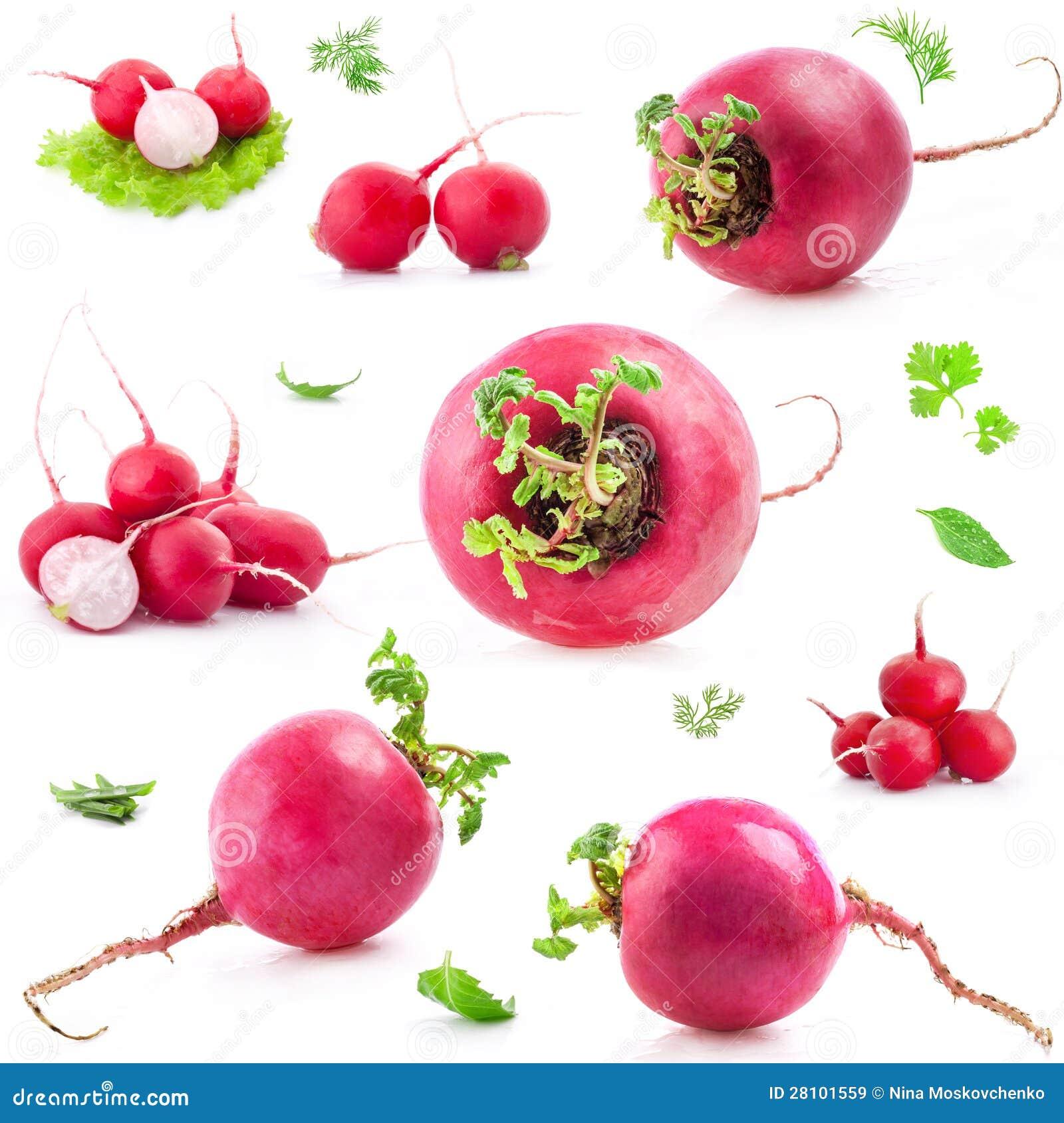 Big and small Red radish