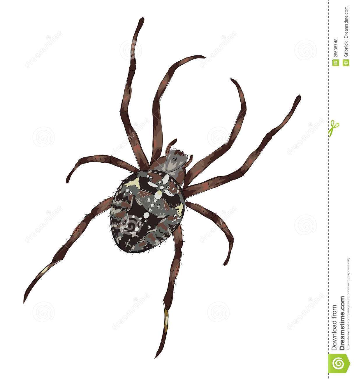 Big Spider With Cross Shaped Drawing On A Back Stock