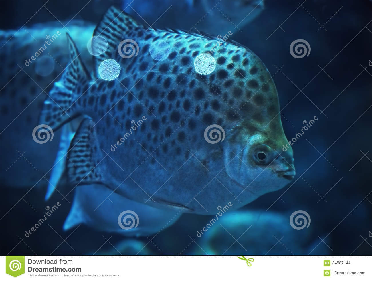 An ocean with a big fish vector illustration for Large ocean fish