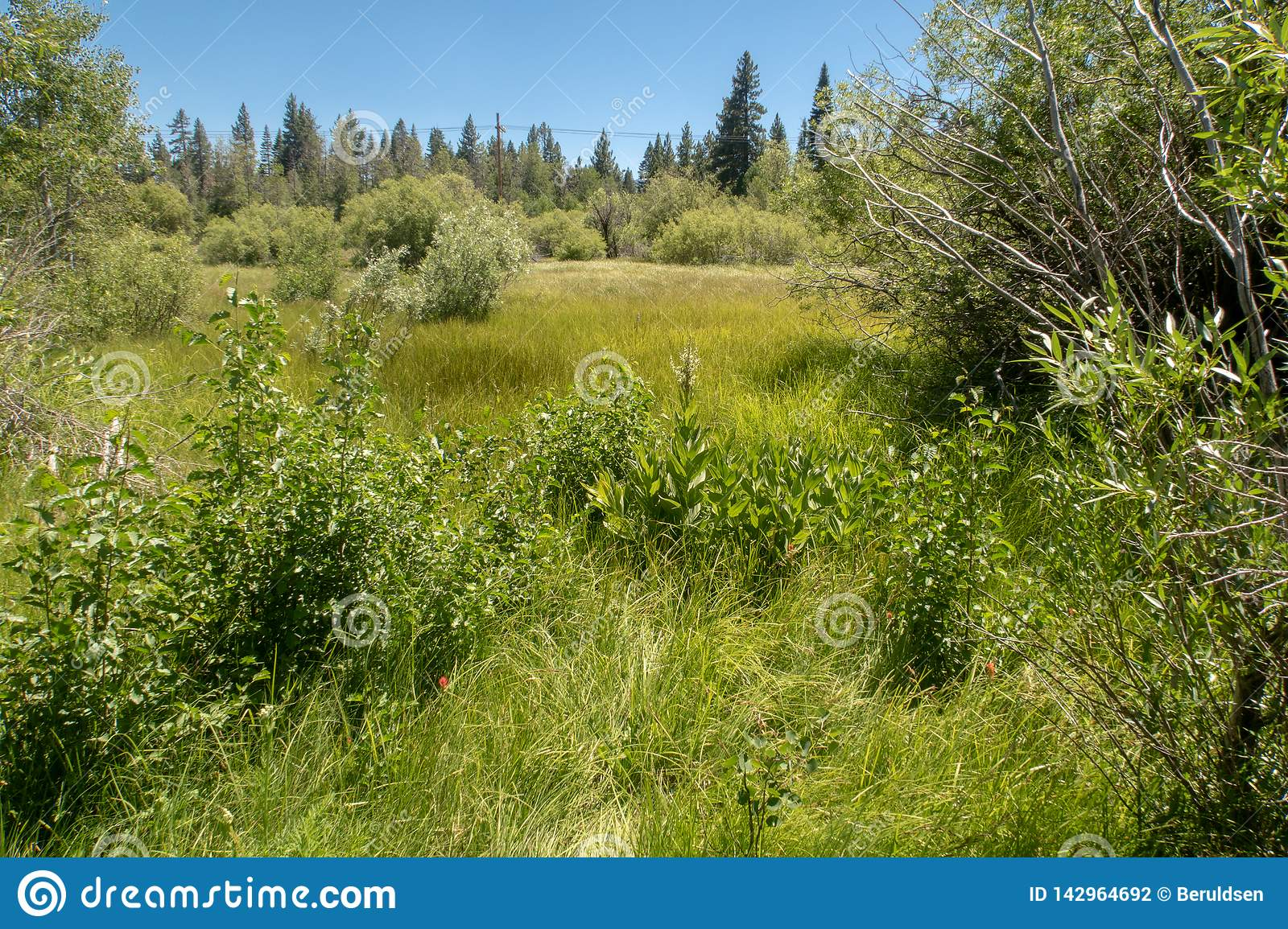 A sprawling meadow near Lake Tahoe