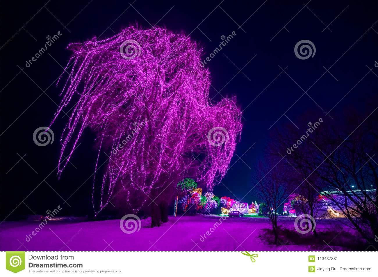 A big tree decorated with purple lights