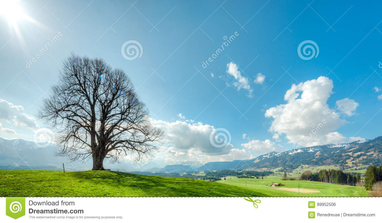 Big tree on green hill, blue sky, clouds and mountains