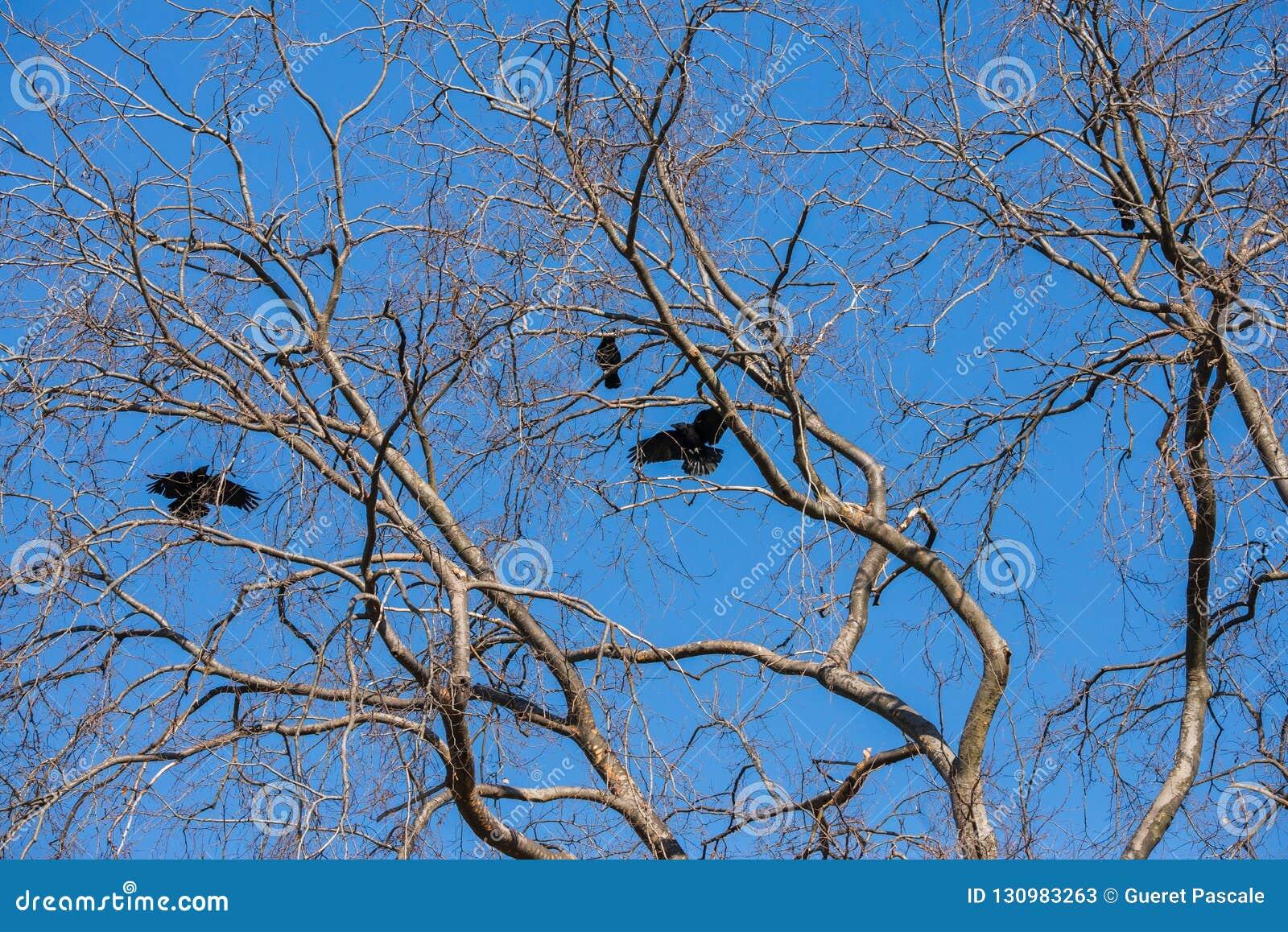 Big tree leafless