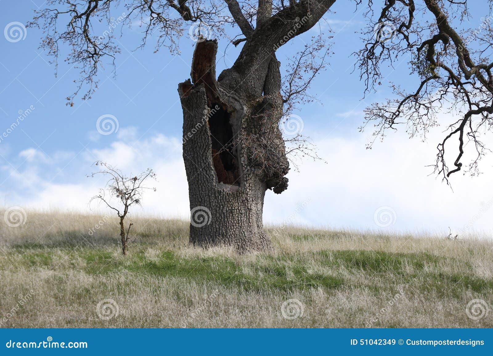 Download Big tree little tree. stock image. Image of landscape - 51042349