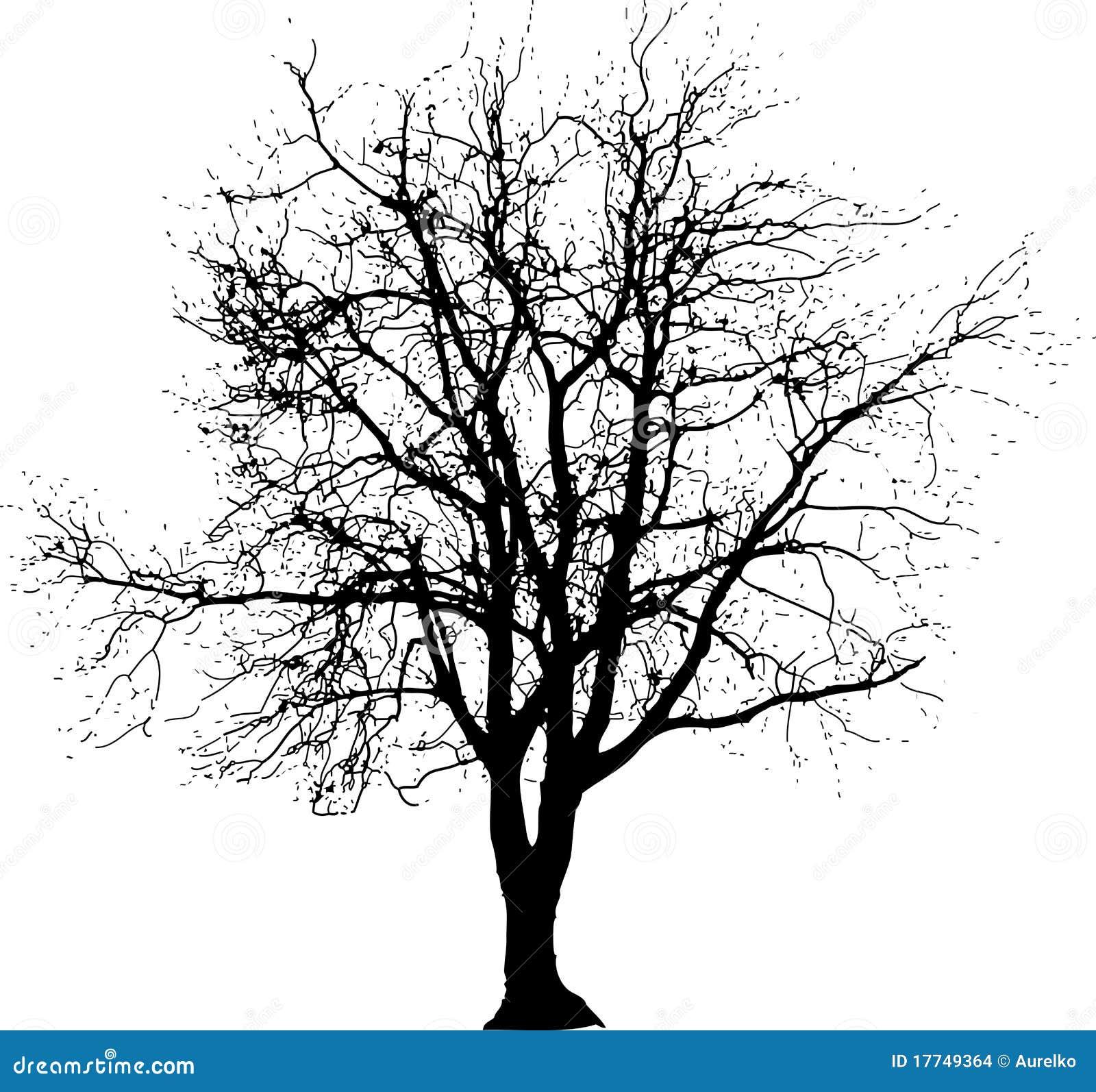 Big Tree One Stock Images Image 17749364
