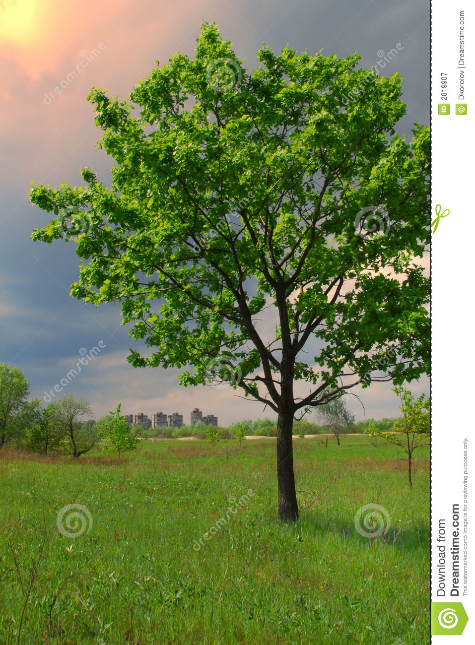 Big tree and small city stock image image of reverse for Small slender trees