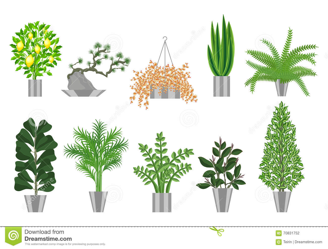 Big Trees House Plants Collection Vector Illustration
