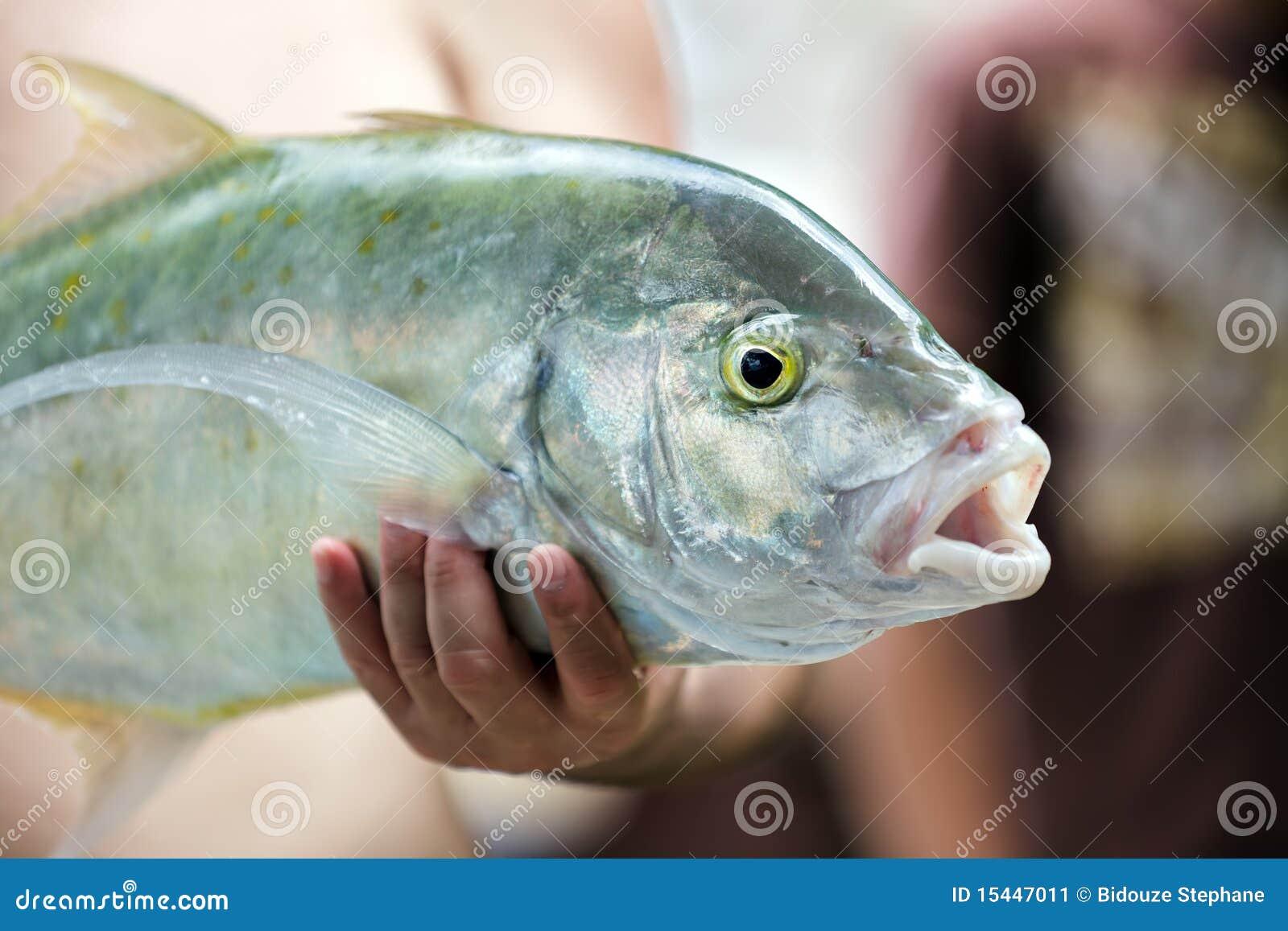 Fisherman holding fresh big tropical silver fish.