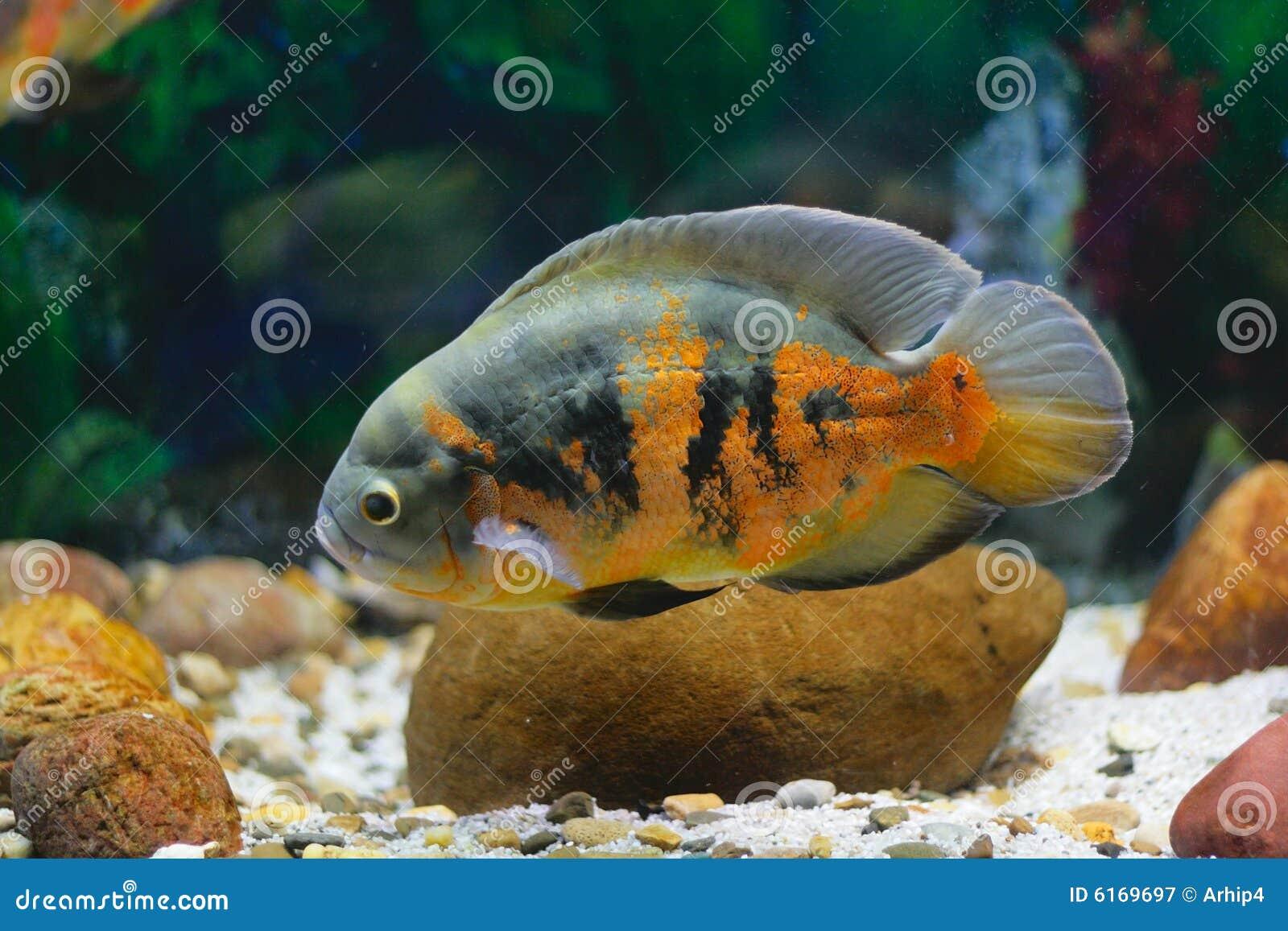 Fish in big aquarium - Big Tropical Fish In Aquarium