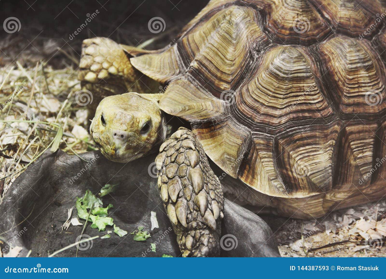 Big turtle in aquarium