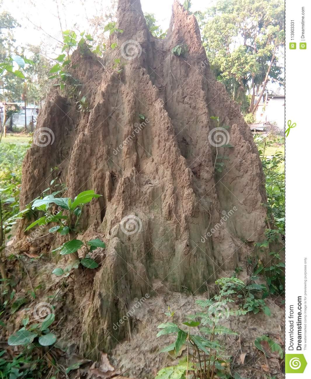 White Ant Nest Stock Image Image Of Termite Called 113903331