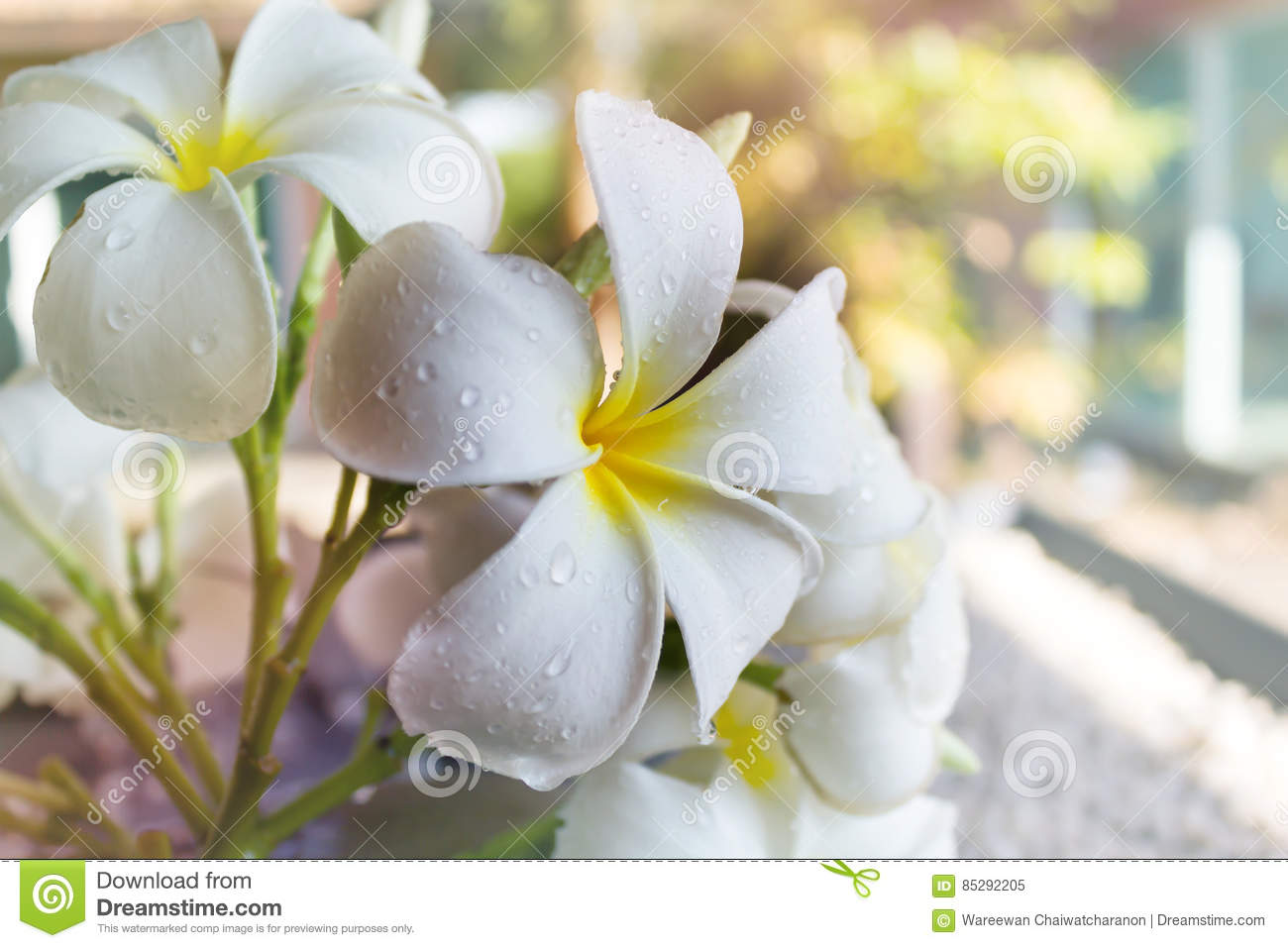 Contemporary dream interpretation of white flowers image collection seeing white flowers in dream image collections flower decoration mightylinksfo
