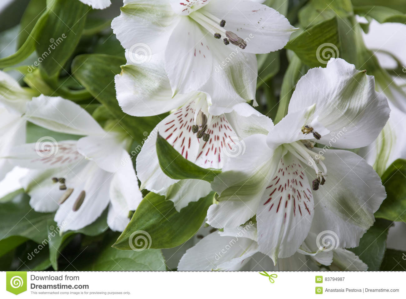 Big White Flowers With Green Leaves Stock Image Image Of Flora
