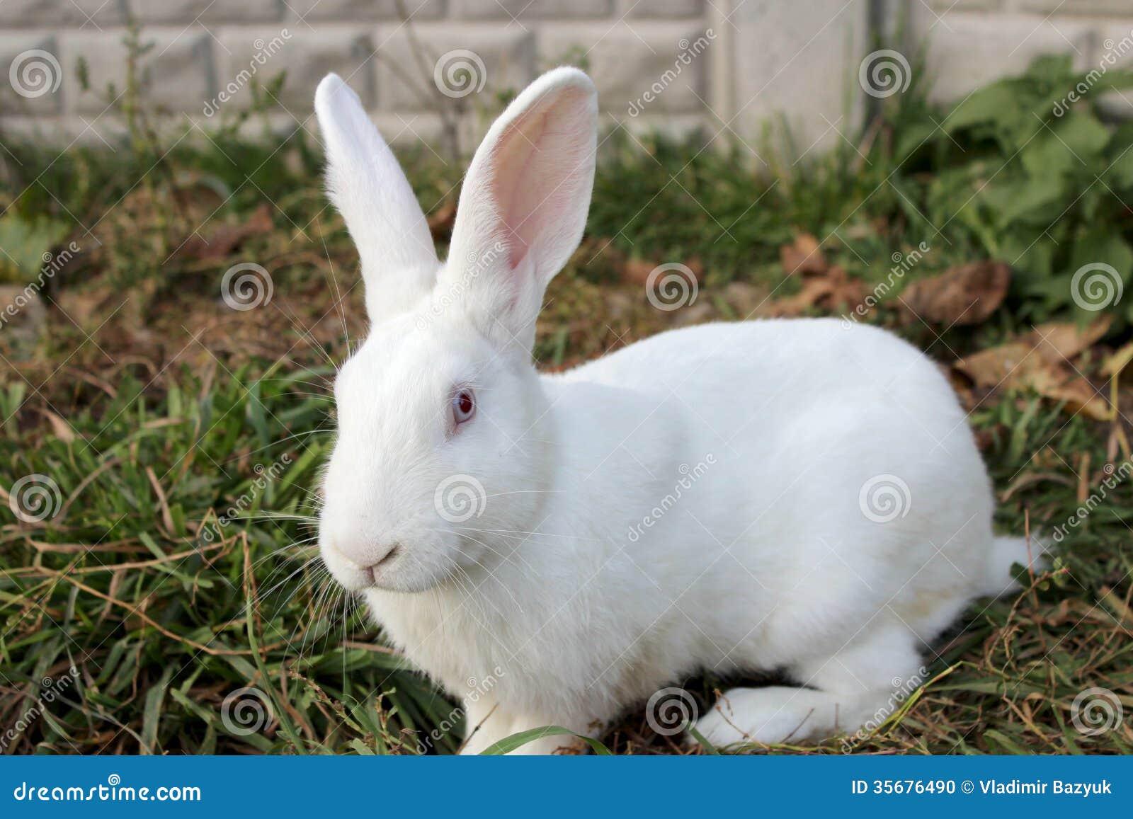 Fat beauty bunny de la cruz sucks a long dick and then fucks 9