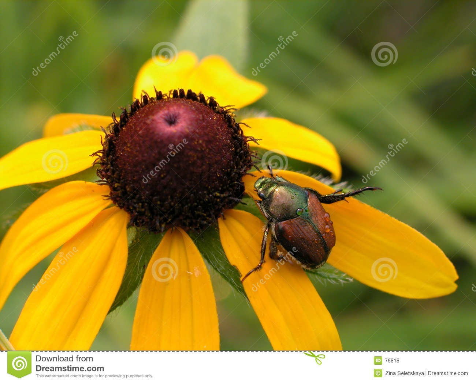 Big yellow with bug