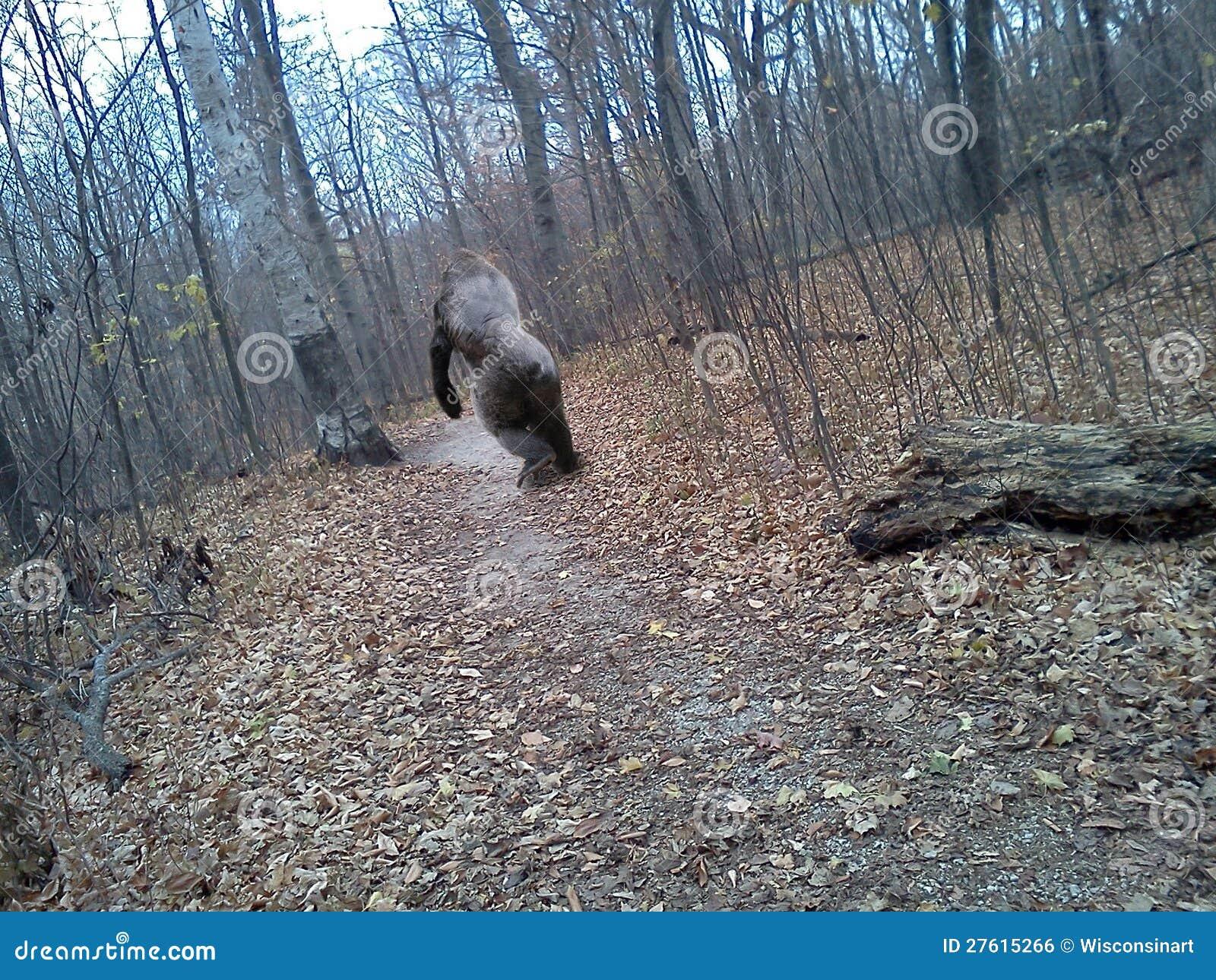 Bigfoot capturou na câmera móvel do telefone de pilha