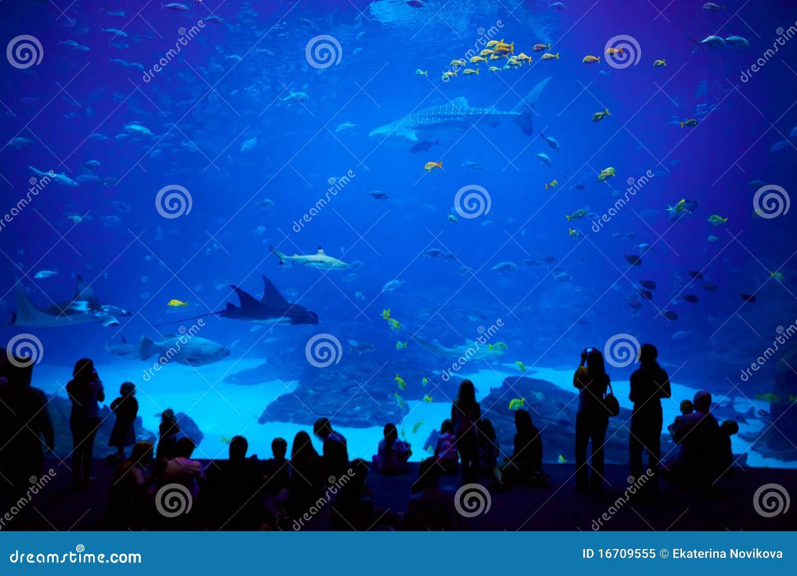 Biggest Aquarium In The World Atlanta Georgia Stock Image Image