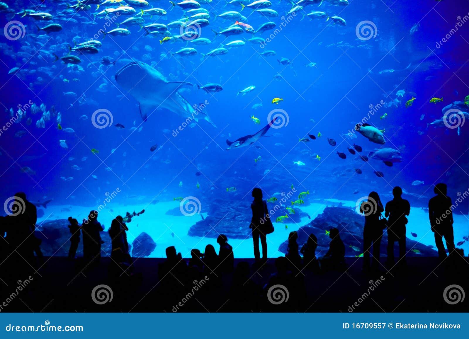 Biggest Aquarium In The World Atlanta Georgia Royalty
