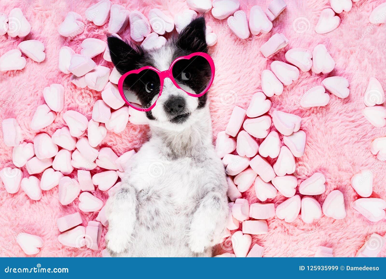 Biglietti di S. Valentino rosa di amore del cane