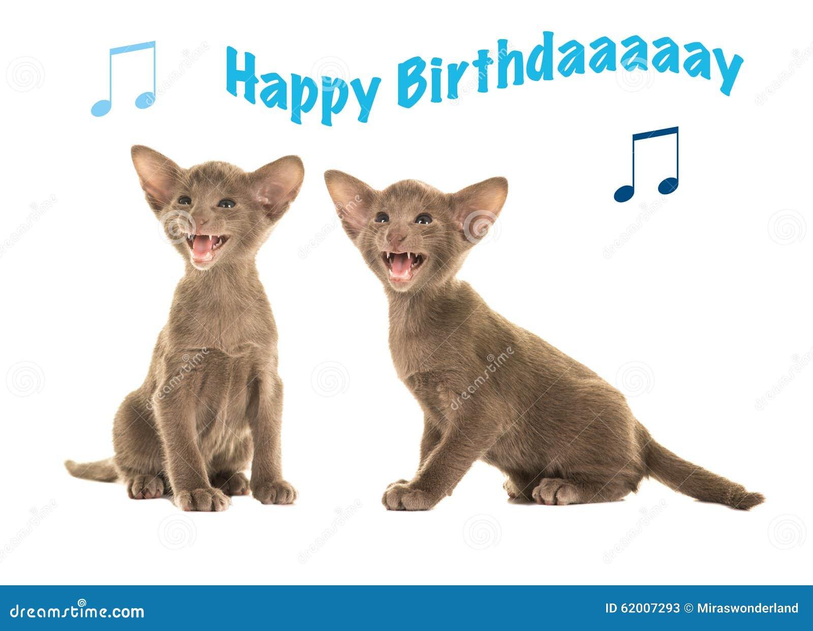 Preferenza Biglietto Di Auguri Per Il Compleanno Con I Gatti Siamesi Del  ED26