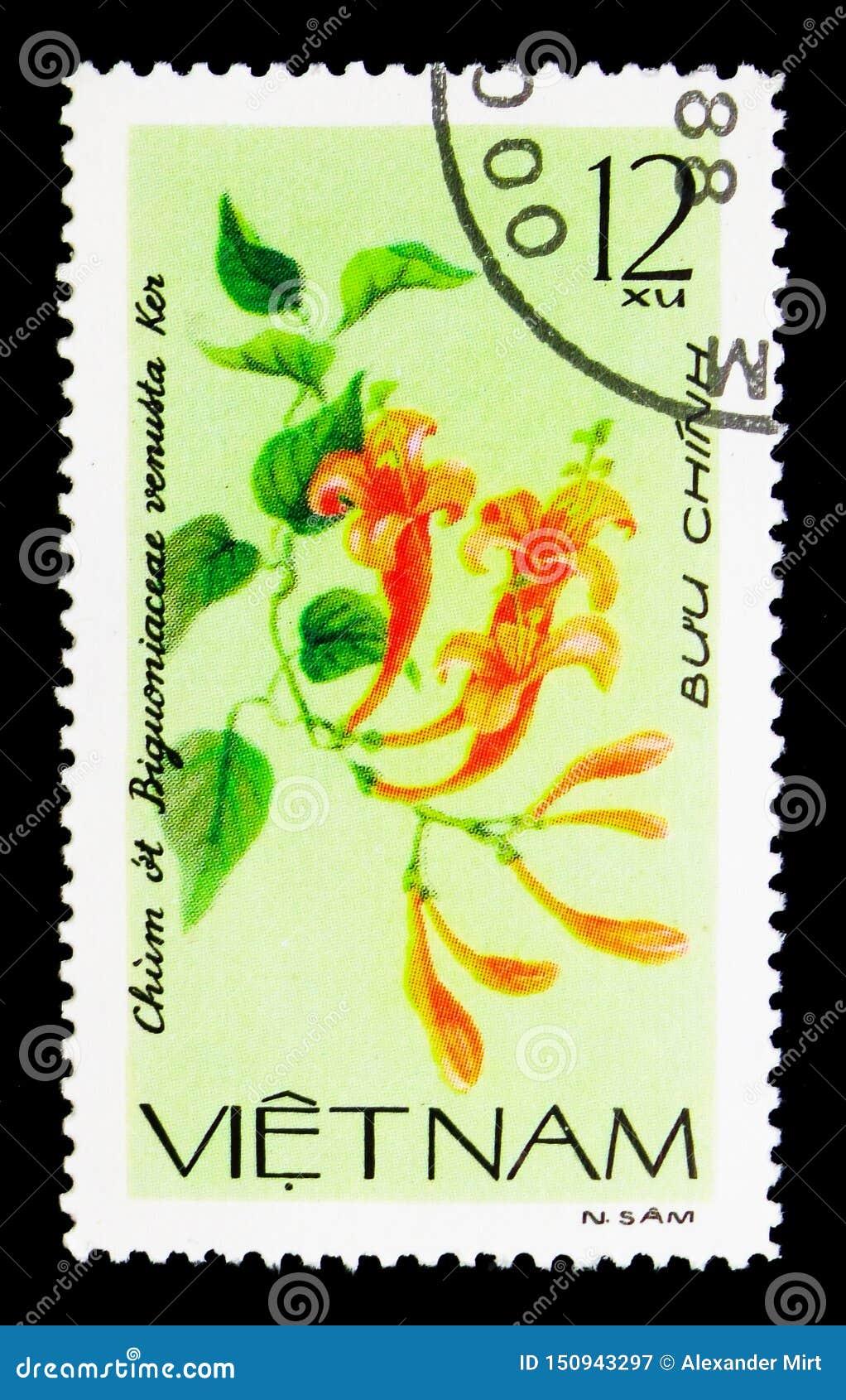 Bignonia venusta, Creeping flowers serie, circa 1980