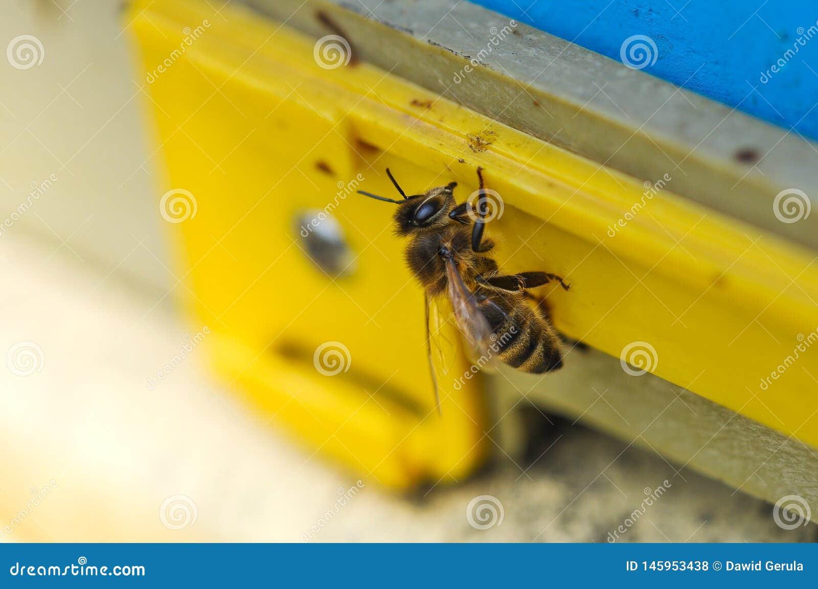 Bij die de bijenkorf ingaan Bij die bij de ingang aan de bijenkorfmacro lopen
