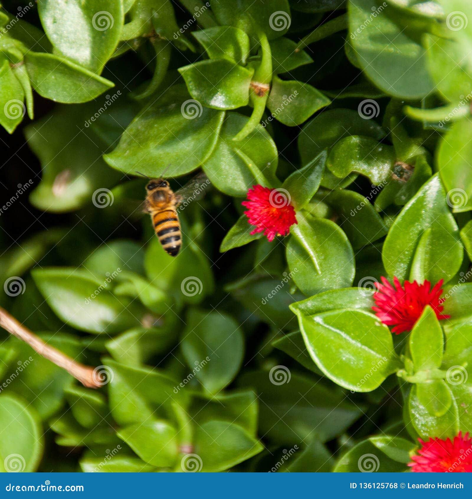 Bij die over het bloembed vliegen