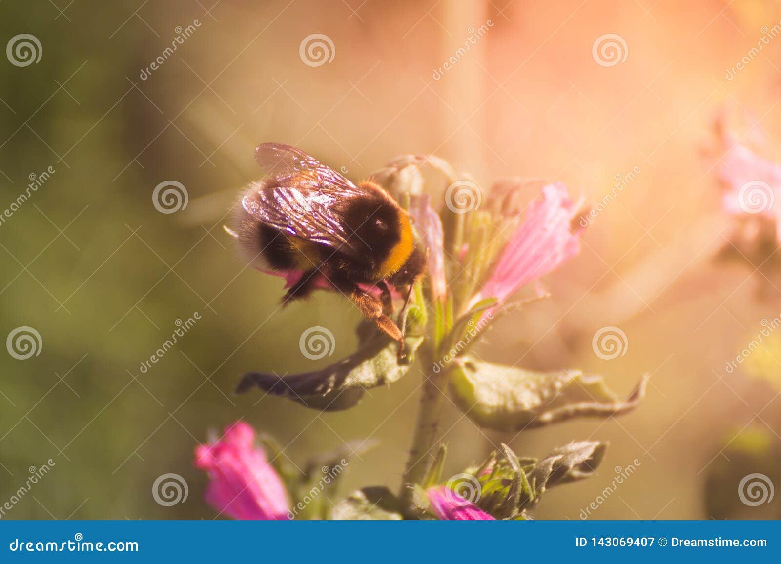 Bij en bloemen
