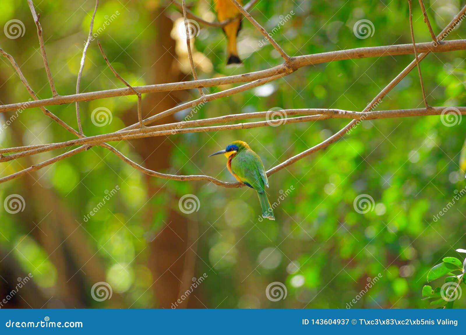 Bij-eter vogel dichtbij meer Baboyaga in Ethiopië, Februari 2019