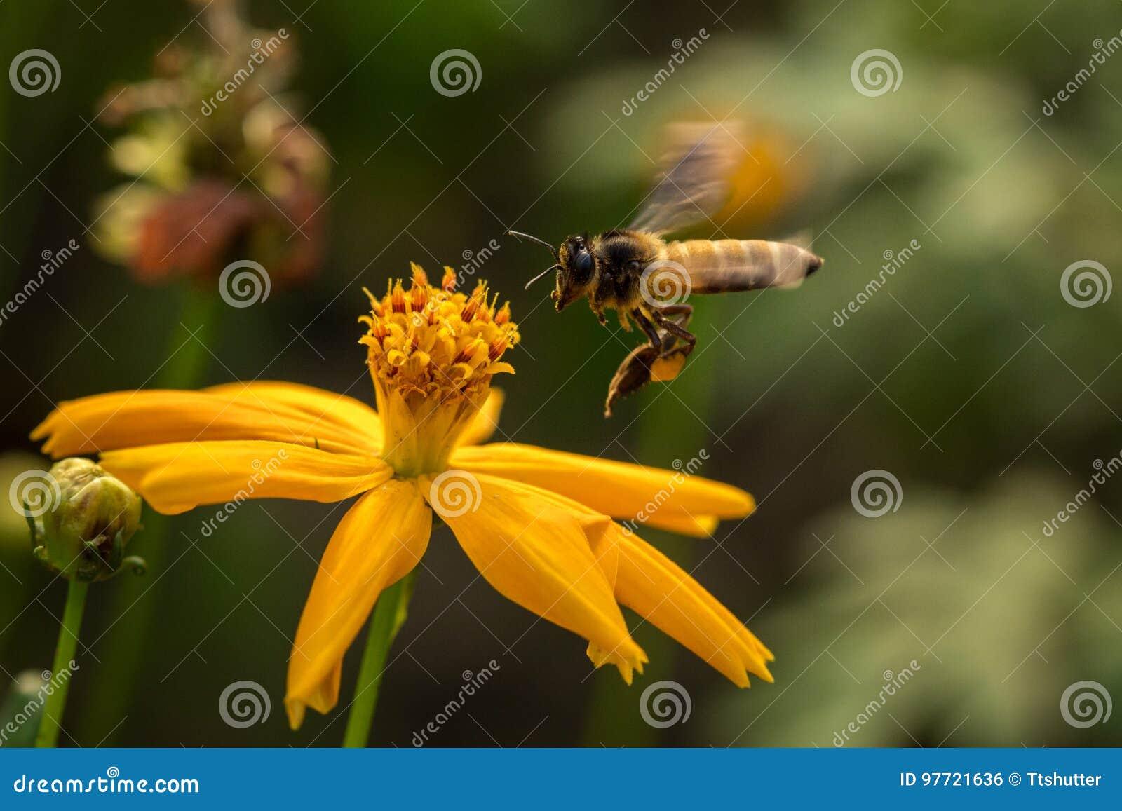 Bij met bloemen
