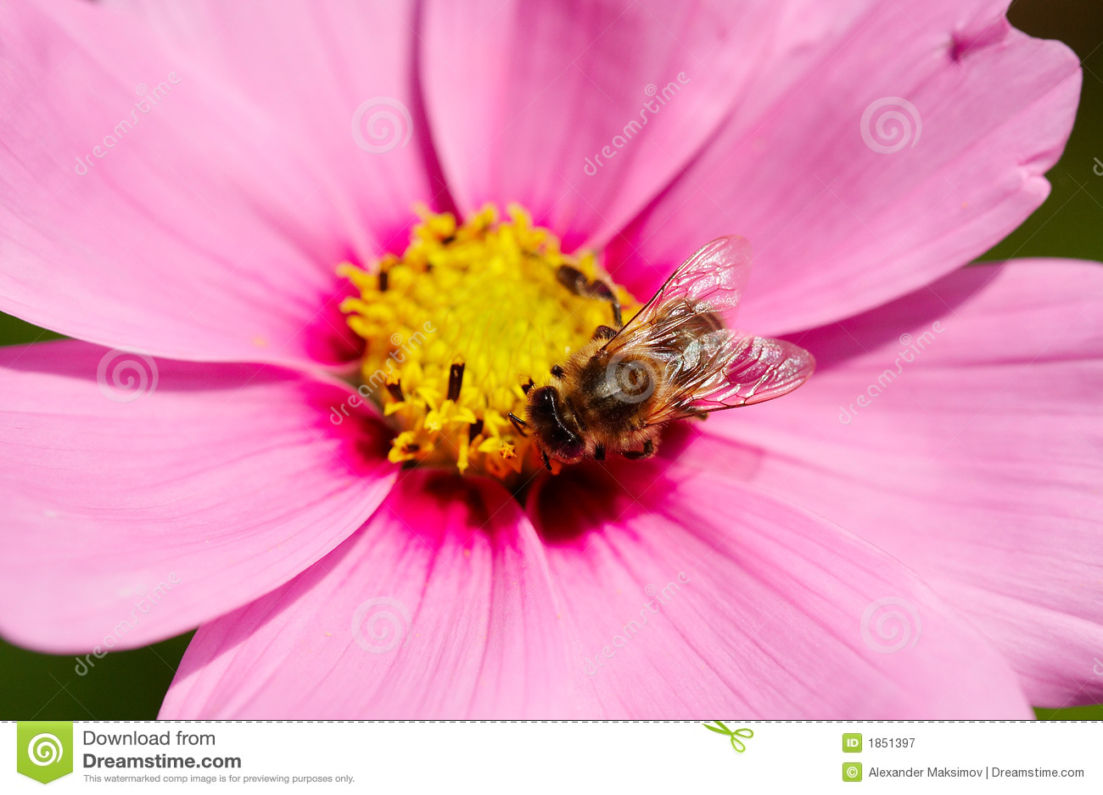 Bij op bloem
