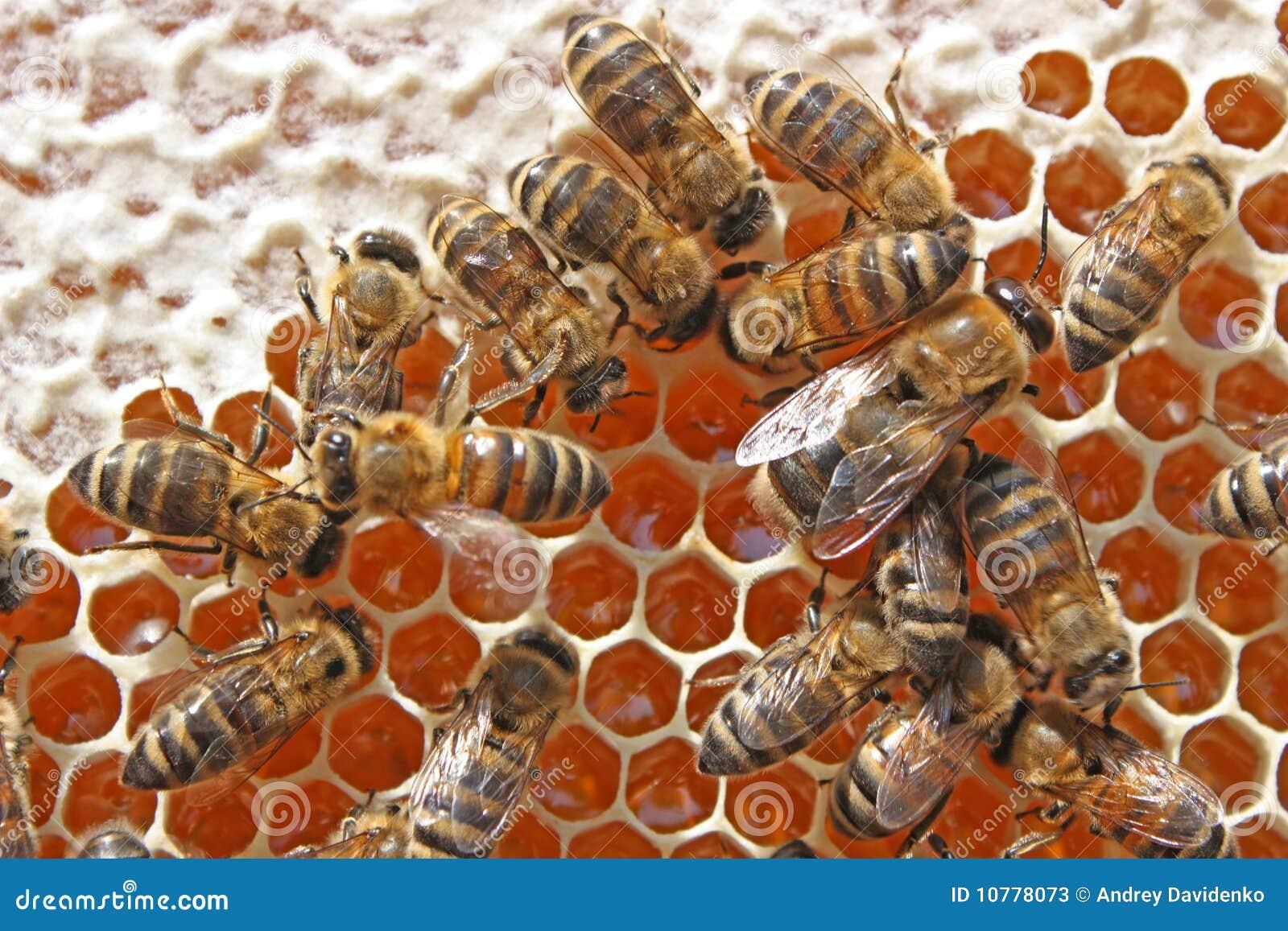 Bijen achter het werk